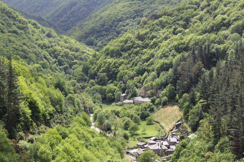 Bosque en As Veigas, Taramundi